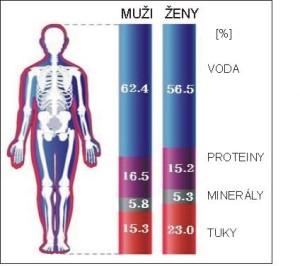 Složení těla